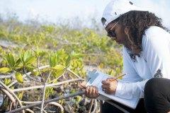 Jewel-studying-Mangrove_